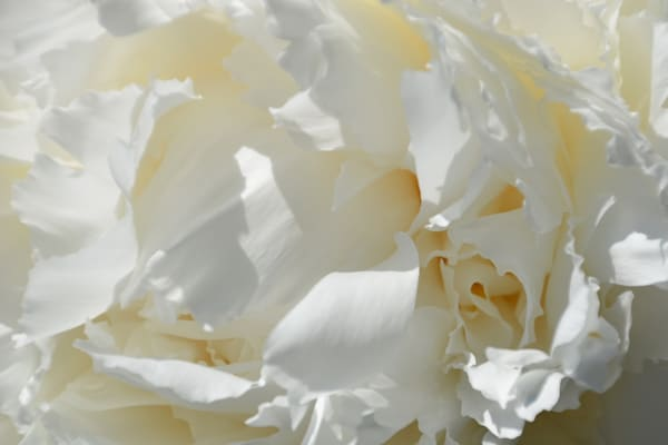 """Whipped Cream"""