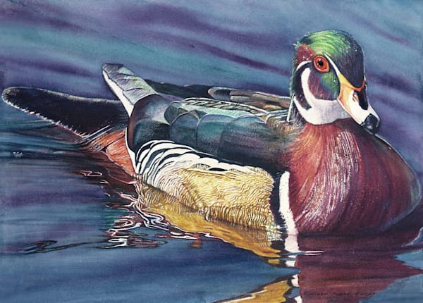 Ducks Unlimited Drake the Wood Duck by/ Colleen Nash Becht