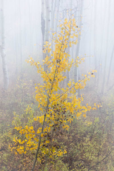 Fog Around the Aspen for sale as fine art photograph by Mike Jensen