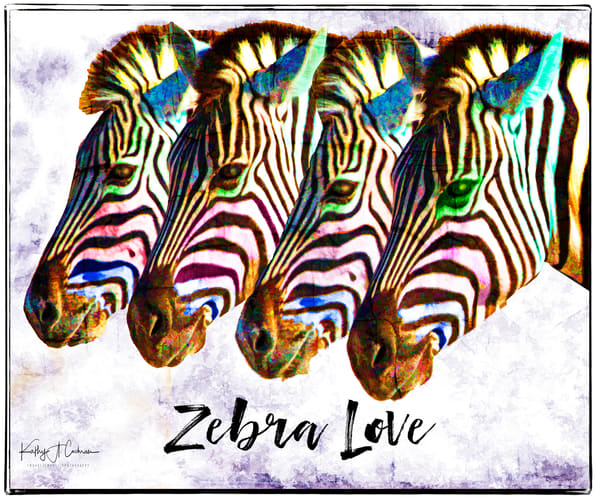Zebra Love Photography Art | Images2Impact