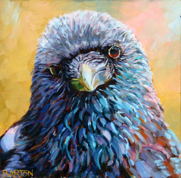 crow, serious, fierce, beautiful