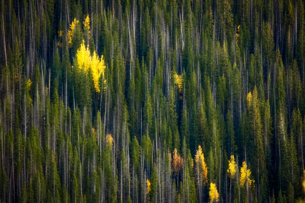 In The Midst Of The Forest fine art landscape photograph by Mike Jensen