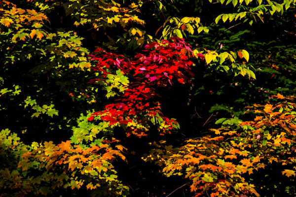 Fall Color Fine Art Photograph | JustBob Images