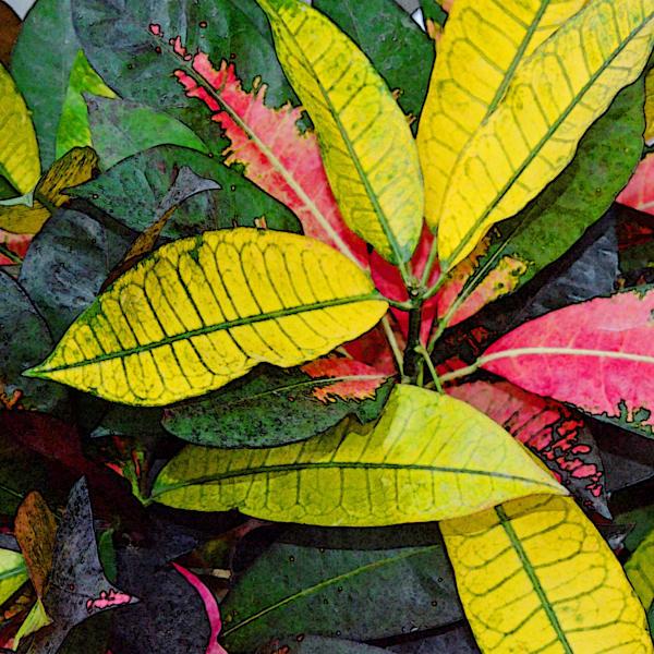 """""""Watercolor Leaves"""""""