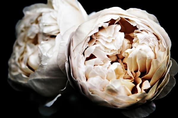 Bourbon Roses