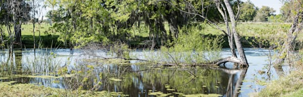 Live Oak Tree Reflection Pano, Damon, Texas