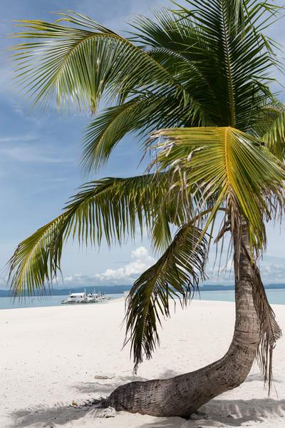 Palm Tree on Beach, Philippines