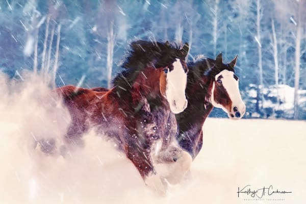 Clydesdales In Snow Photography Art | Images2Impact