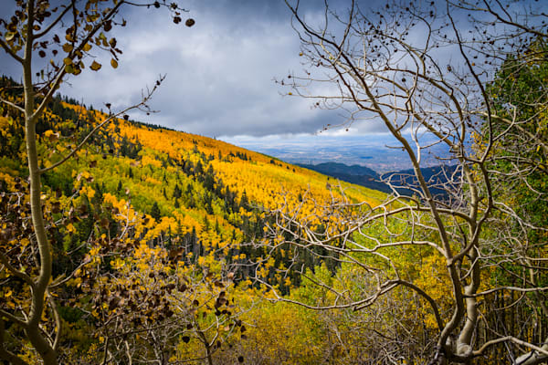 Photography, aspens, fall, autumn, southwest, new mexico, landscape, sangre de christo mountains