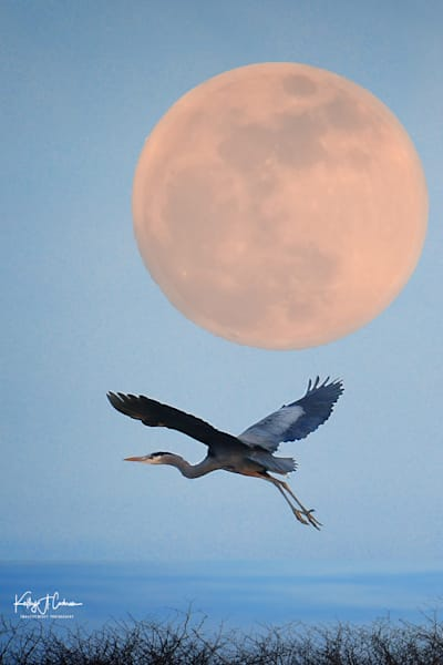 Rising Moon Heron
