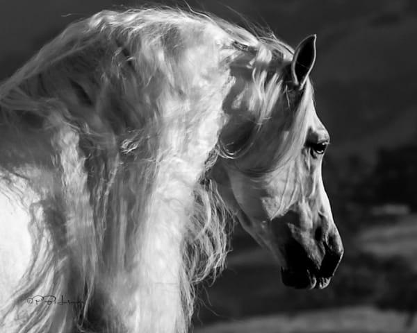 Wild Mane Photography Art | HoofPrintsFineArt