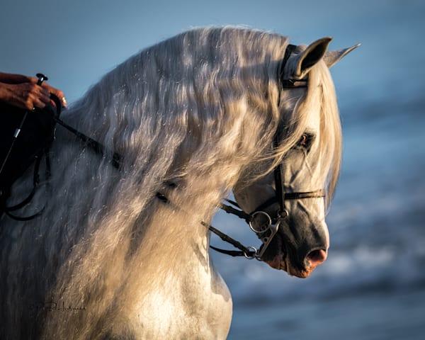 Andalusian Photography Art   HoofPrintsFineArt
