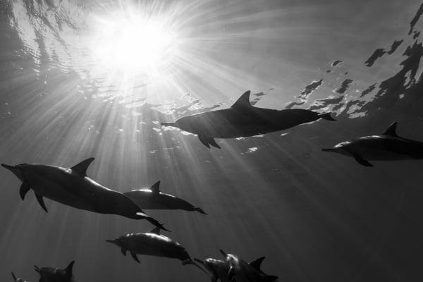 Marine Life Photography | Dancing Shadows by Michael Hardie