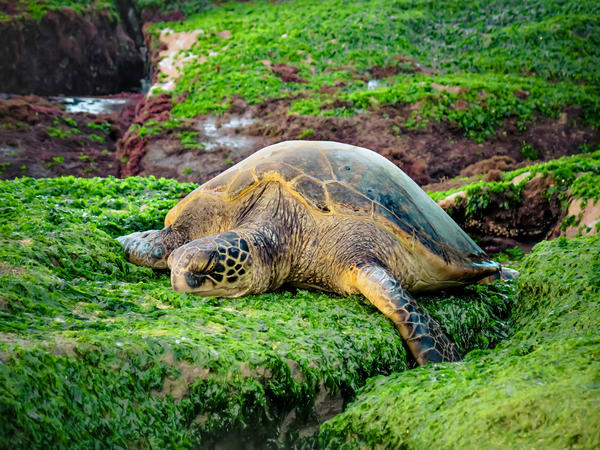 Marine Life Photography | Easy Like Sunday Morning by Michael Hardie