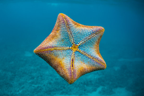 Marine Life Photography | I'm a Star by Michael Hardie
