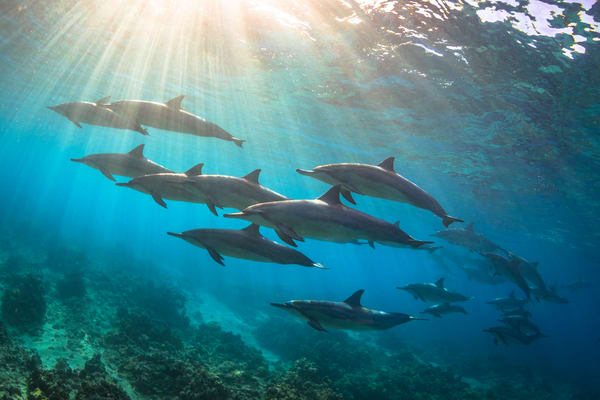 Marine Life Photography | Out of the Blue by Michael Hardie