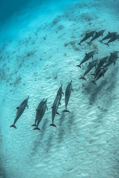 Marine Life Photography | Sandbox by Michael Hardie