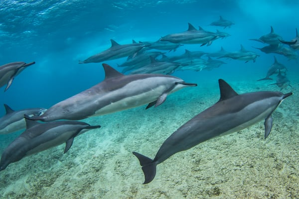 Marine Life Photography | Slipstream by Michael Hardie