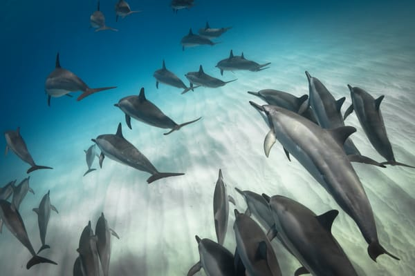 Marine Life Photography | Teaching and Learning by Michael Hardie