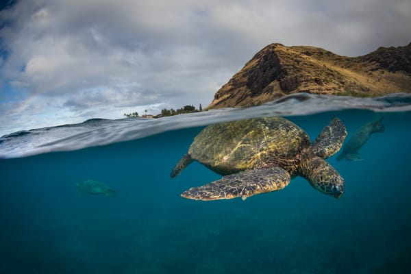 Marine Life Photography | Under the Sea by Michael Hardie