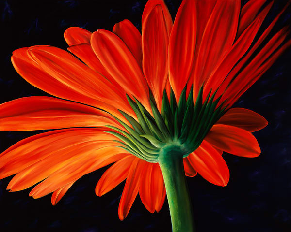 Floral fine art paintings