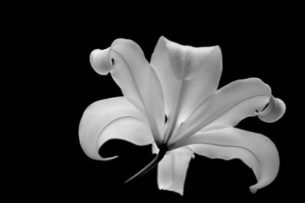 Black & White Visions