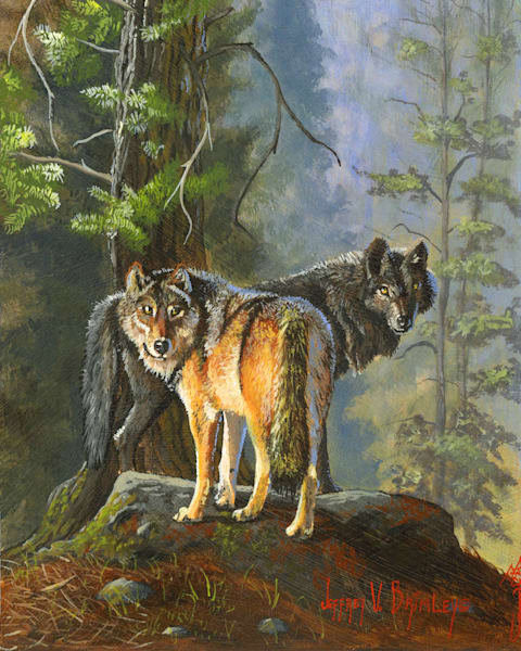 North American Gray Wolves Prints