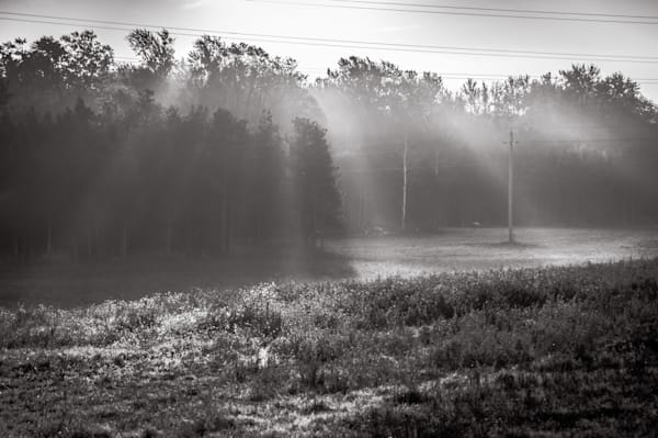 Shop Fine Art Black & White Photographs of mist through the trees | Sage & Balm Photography