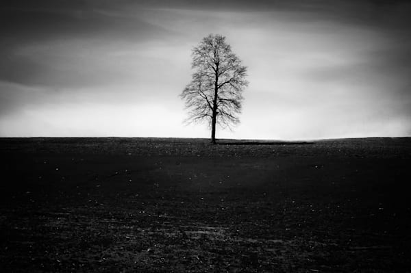 Black & white tree photographs for sale as fine art | Sage & Balm Photography