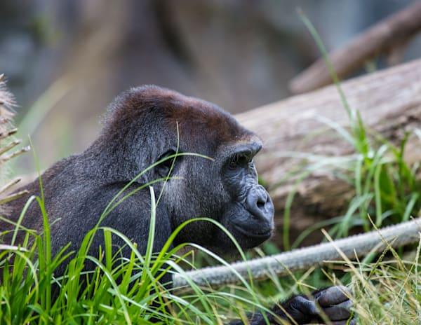 Mimic Photography Land Animals