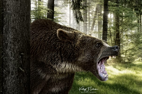 Crabby Bear Photography Art | Images2Impact