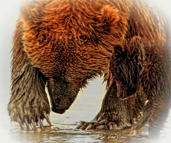 Bears of North America