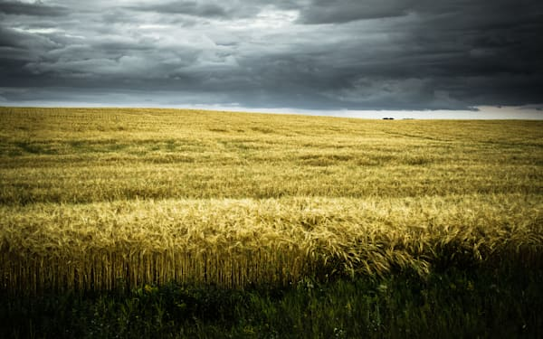Dark Plains (Saskatchewan) by Pierre Ribout | SavvyArt Market photograph