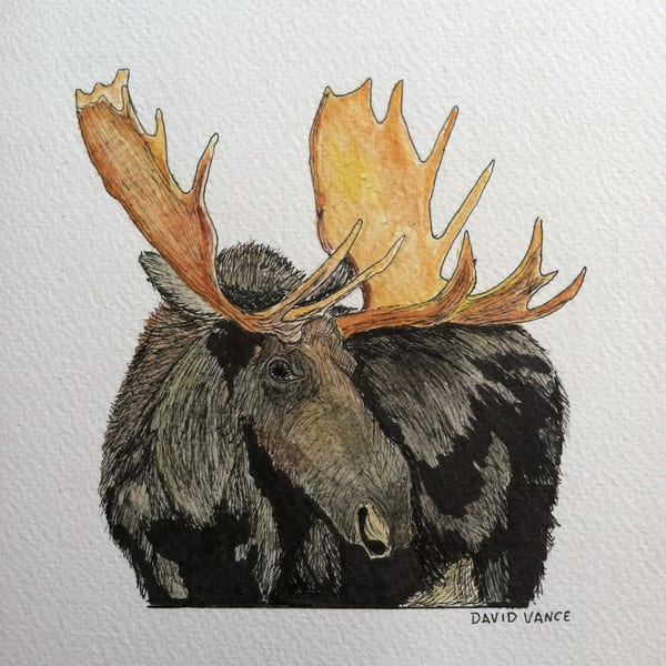 Moose Art | DavidPVance Prints