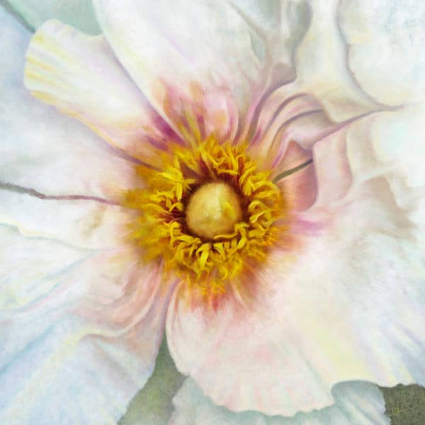 White Peony Squared, wall art. A print of an original painting by the artist, Mary Ahern.