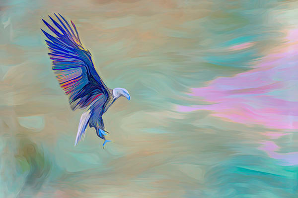 Art Photograph Abstract Bald Eagle In Flight fleblanc