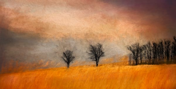 Art Photograph Two Trees Warm Abstract fleblanc