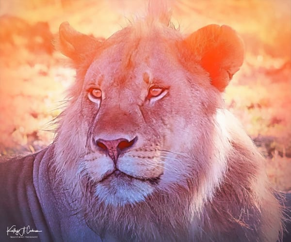 Lion Glow