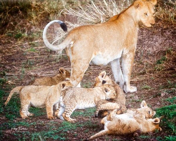 Maternal Pride
