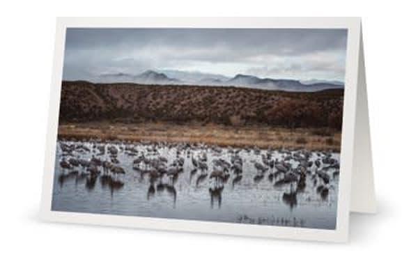 Grey Day At Bosque Del Apache | Carol Brooks Parker Fine Art Photography