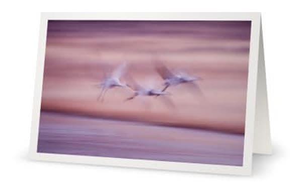 Wingbeats Trio