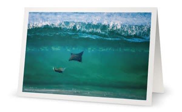Wave Riders | Carol Brooks Parker Fine. Art Photography