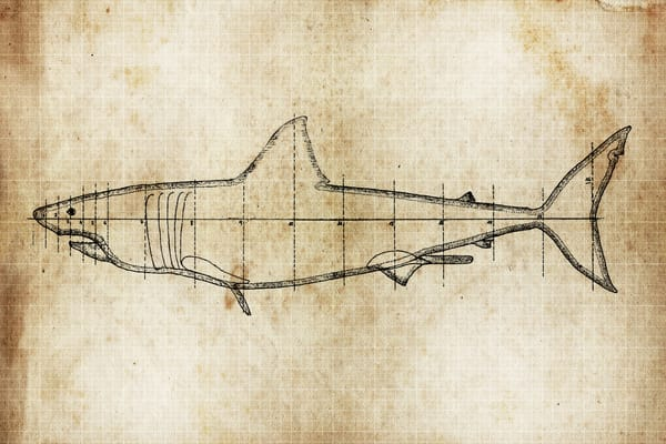 Fast As A Shark