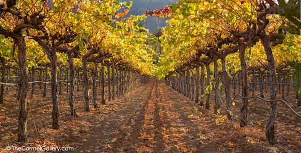 Autumn Vines Art | The Carmel Gallery