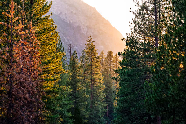 Sunset Through The Trees In Kings Canyon Photograph For Sale As Fine Art