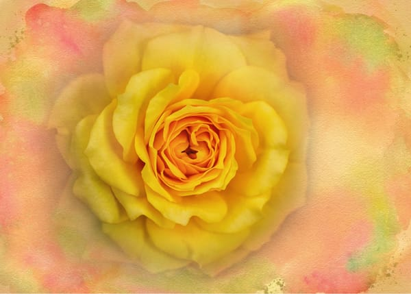 A Rose Remembered Photography Art | Carol Brooks Parker Fine Art Photography