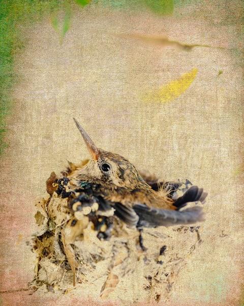 Feathered Nest Photography Art | Carol Brooks Parker Fine Art Photography