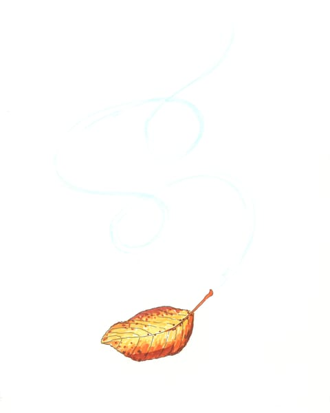 A falling leaf
