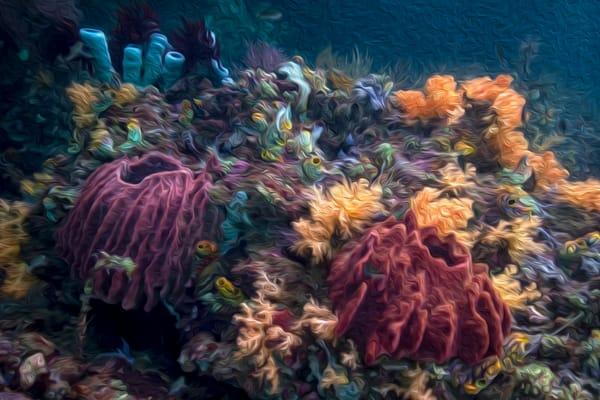 Coral Dreams #1 AE - Raja Ampat, Indonesia 2013