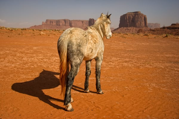 Navajo Pony After a Dust Storm - Monument Valley, Arizona 2012